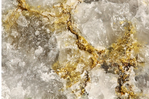 Could This Newly Discovered Gold-Loving Fungus Reveal New Massive Gold Deposits In Australia?