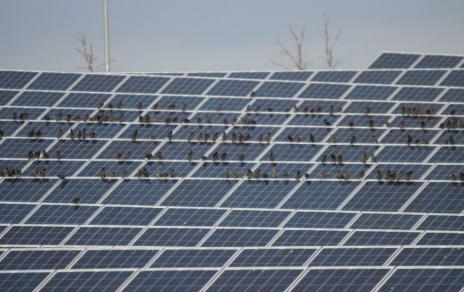 Silver and solar - President Biden pledges to boost solar energy